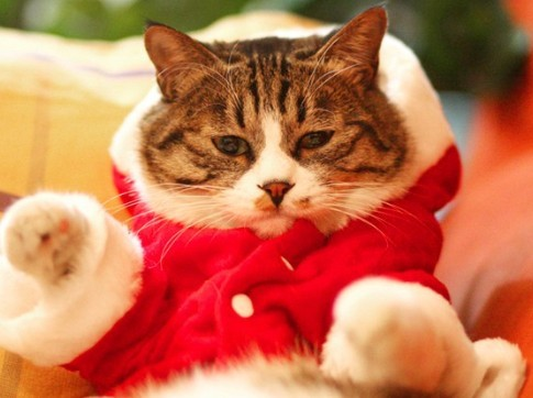 穿衣可爱猫咪图片