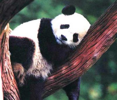 平均每家动物园每年在熊猫的研究和教育上的